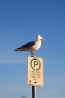 view--parking seagull