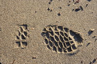 view--footstep on the sands