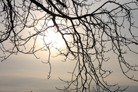 sun blocked by branches near forensic psychiatry hosptial
