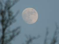 moon near willington point park