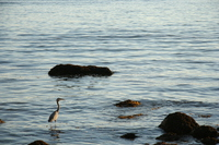 lonely sea bird